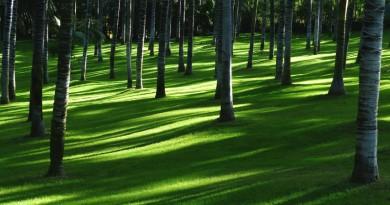 Fotografická soutěž FSC vybídla k zachycení pestrobarevnosti podzimního lesa