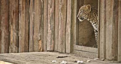 Na mláďata i konec zimování lákají české ZOO. Kam se vydat o víkendu na výlet?