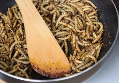 TIP NA VÍKEND: Pražská ZOO zve na víkend hmyzožravců. Ochutnáte také?