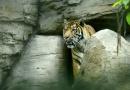 KOMENTÁŘ: Otevře nám zabíjení tygrů v Česku oči?