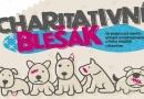 Psí hospic na Blanensku pomáhá starým, nemocným a opuštěným psům