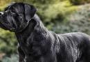 Co odhalí zbarvení psí srsti?