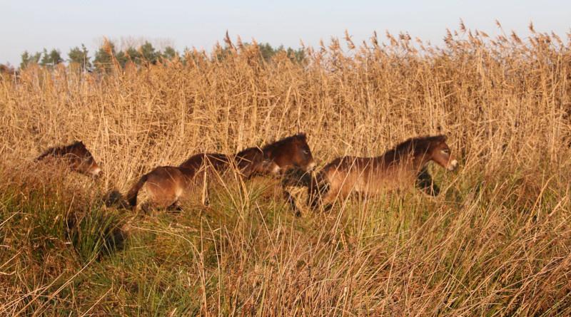 Dvě nové rezervace se mohou pochlubit divokými koňmi