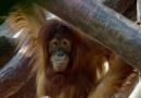 Zoologické zahrady opět otevírají své brány, některá omezení však zůstávají